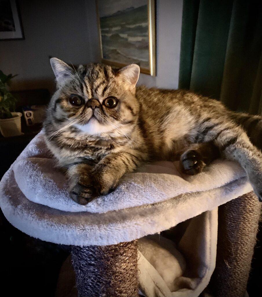 Bild på Katten Dolly